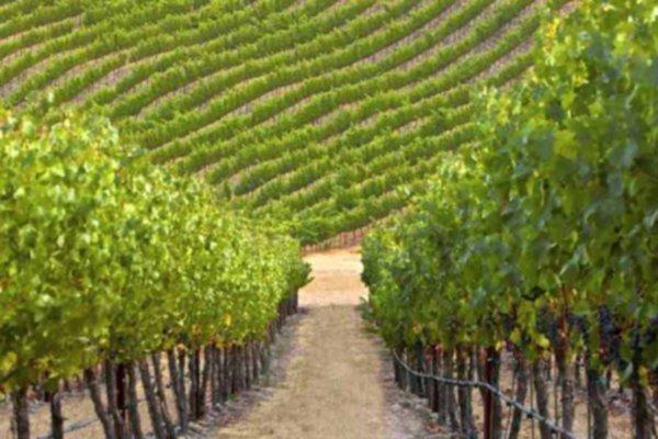 2011 Bordeaux Releases BC